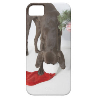 German short-haired pointer sticking snout in barely there iPhone 5 case