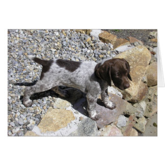 German Shorthaired Pointer Puppy Note Card