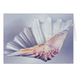 giant clam shell for decorative use greeting card
