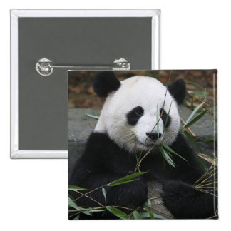 Giant pandas at the Giant Panda Protection & 15 Cm Square Badge