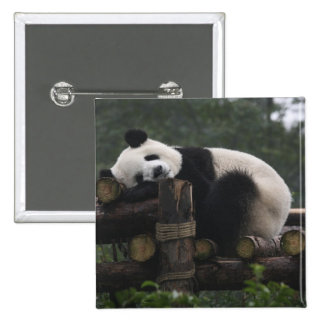 Giant pandas at the Giant Panda Protection & 3 15 Cm Square Badge