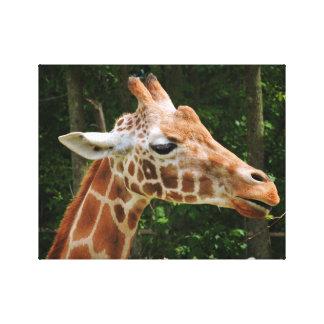 Giraffe Gallery Wrapped Canvas