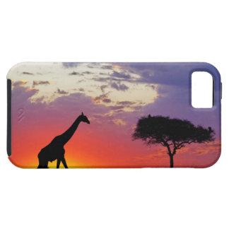 Giraffe silhouetted at sunrise, Giraffa Tough iPhone 5 Case