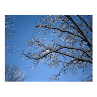 Glittering Ice and Snow Covered Trees Postcard
