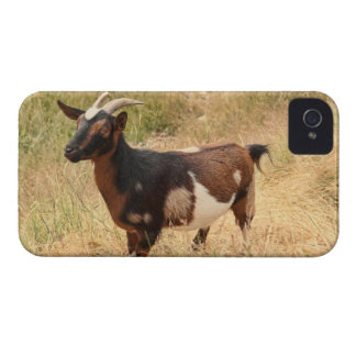 Goat Picture iPhone 4 Case