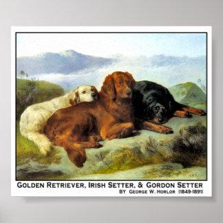 Golden Retriever, Irish Setter & Gordon Setter Poster
