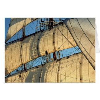 Golden Sails of a Tallship Greeting Card
