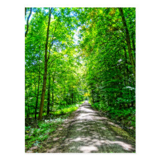 golden trail in sunny forest postcard