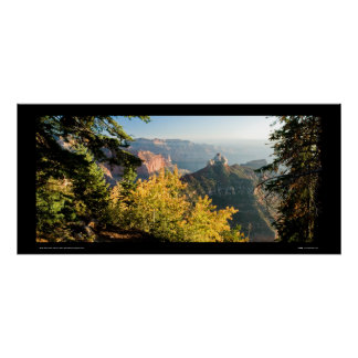 Grand Canyon with a golden birch Poster