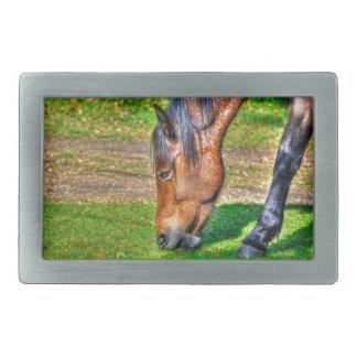 Grazing Bay New Forest Pony Horse Photo Rectangular Belt Buckles