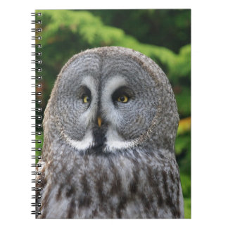 Great Grey Owl Note Books