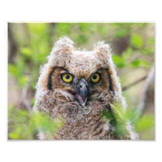 Great Horned Owl Photo Print
