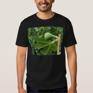 Green figs ripening on a fig tree shirts