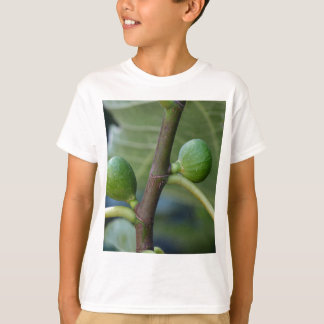 Green fruits of a common fig  tree tshirt