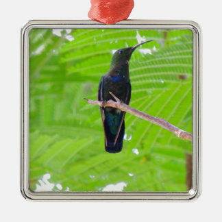 Green Throated Carib Hummingbird Silver-Colored Square Decoration