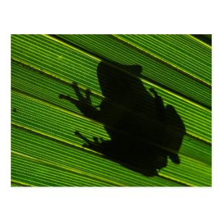 Green Tree Frog (Hyla cinerea) 1 Postcard