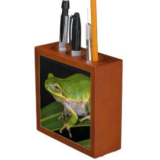 Green Tree Frog (Hyla cinerea) 2 Desk Organisers