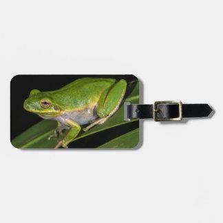 Green Tree Frog (Hyla cinerea) 2 Luggage Tags