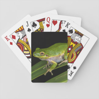 Green Tree Frog (Hyla cinerea) 2 Playing Cards