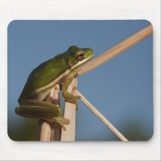 Green Tree Frog Hyla cinerea) Little St Mouse Pad