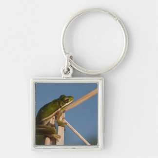 Green Tree Frog Hyla cinerea) Little St Silver-Colored Square Key Ring