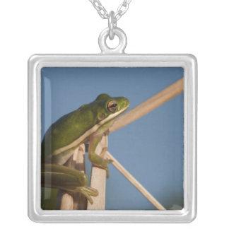 Green Tree Frog Hyla cinerea) Little St Square Pendant Necklace