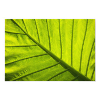 Green veined leaves of tropical foliage in 2 photographic print