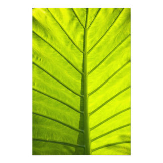 Green veined leaves of tropical foliage in photo art