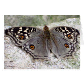 Grey Butterfly Colour Image - Greeting Card