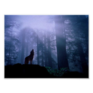 Grey Wolf Howling At Dawn Poster