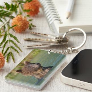 grizzly bear swimming Single-Sided rectangular acrylic key ring