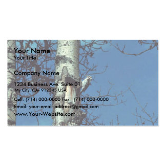 Hairy Woodpecker Pack Of Standard Business Cards