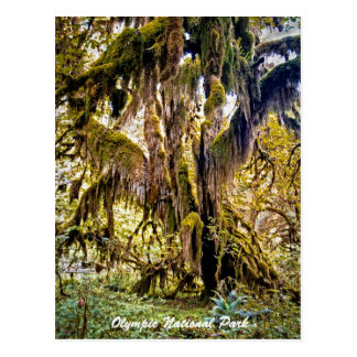 Hall of Mosses Trail, Olympic National Park Postcard