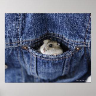 Hamster in pocket poster