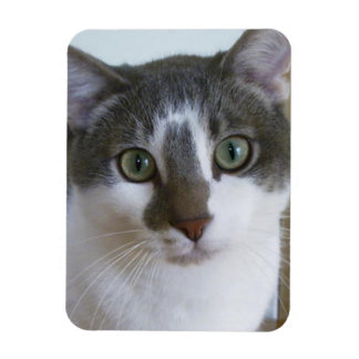 Handsome Grey and White cat Rectangular Photo Magnet
