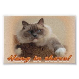 Hang in There! Poster
