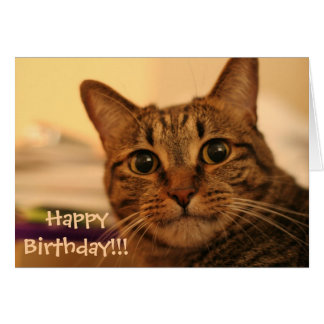 Happy Birthday Tabby Cat Card