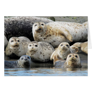 Harbor Seals Hauled Out on Sandy Beach Greeting Card
