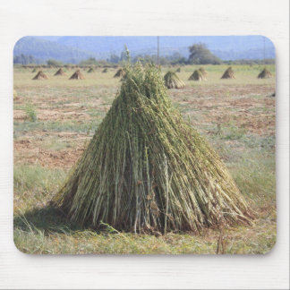 Harvested Sesame Crop Mouse Pad