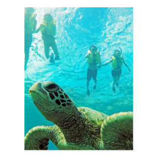 Hawaii Turtle and Snorkelers Postcard