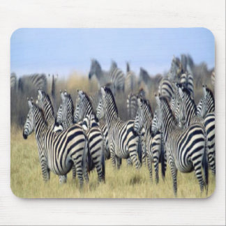 Heard of zebras gathered on a mousepad