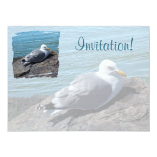 Herring Gull Resting on Rock Jetty: 17 Cm X 22 Cm Invitation Card