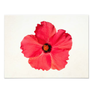Hibiscus - Personalized Tropical Hot Pink Flower Photo
