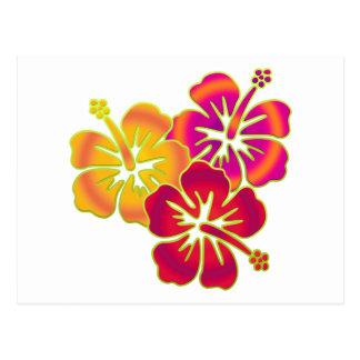 hibiscus trio postcard