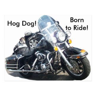 Hog Dog - Born to Ride! Postcard