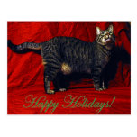 Holiday Cat - postcard