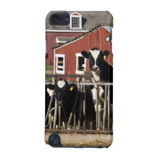 Holsteins at Boggy Meadow Farm in Walpole, New iPod Touch (5th Generation) Covers
