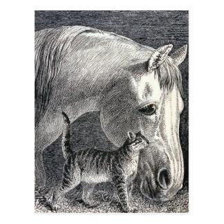 """Horse and Cat"" Vintage Illustration Postcard"