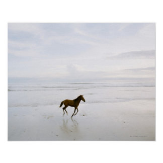 Horse running on the beach poster