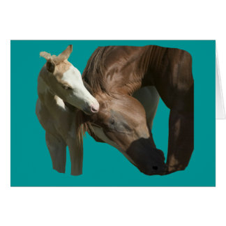 Horses - A filly's love Greeting Card